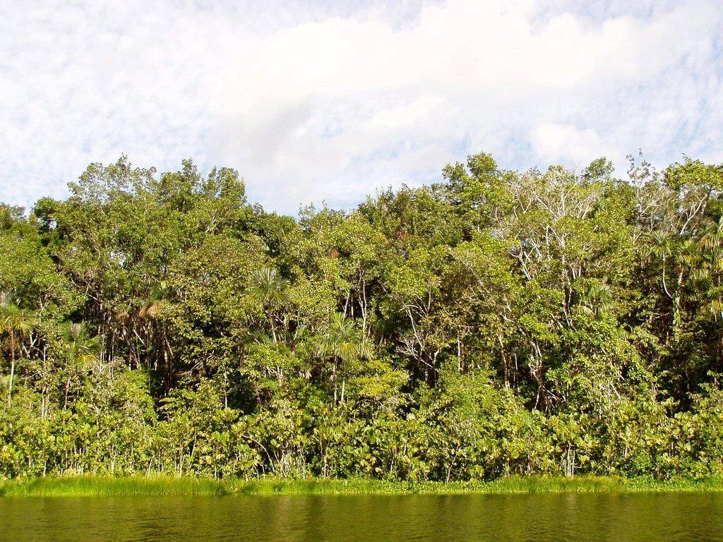 Laguna Pilchicocha, Amazonia. Photo by Dan via Flickr CC