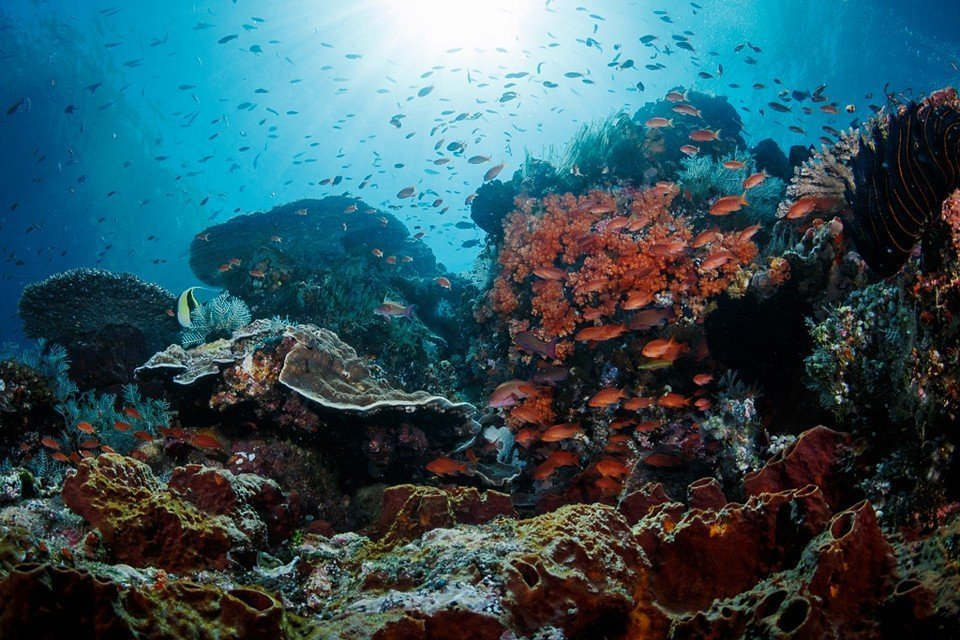 Guide to Diving in Bali & 10 Best Dive Sites in Bali You Don't Want to Miss