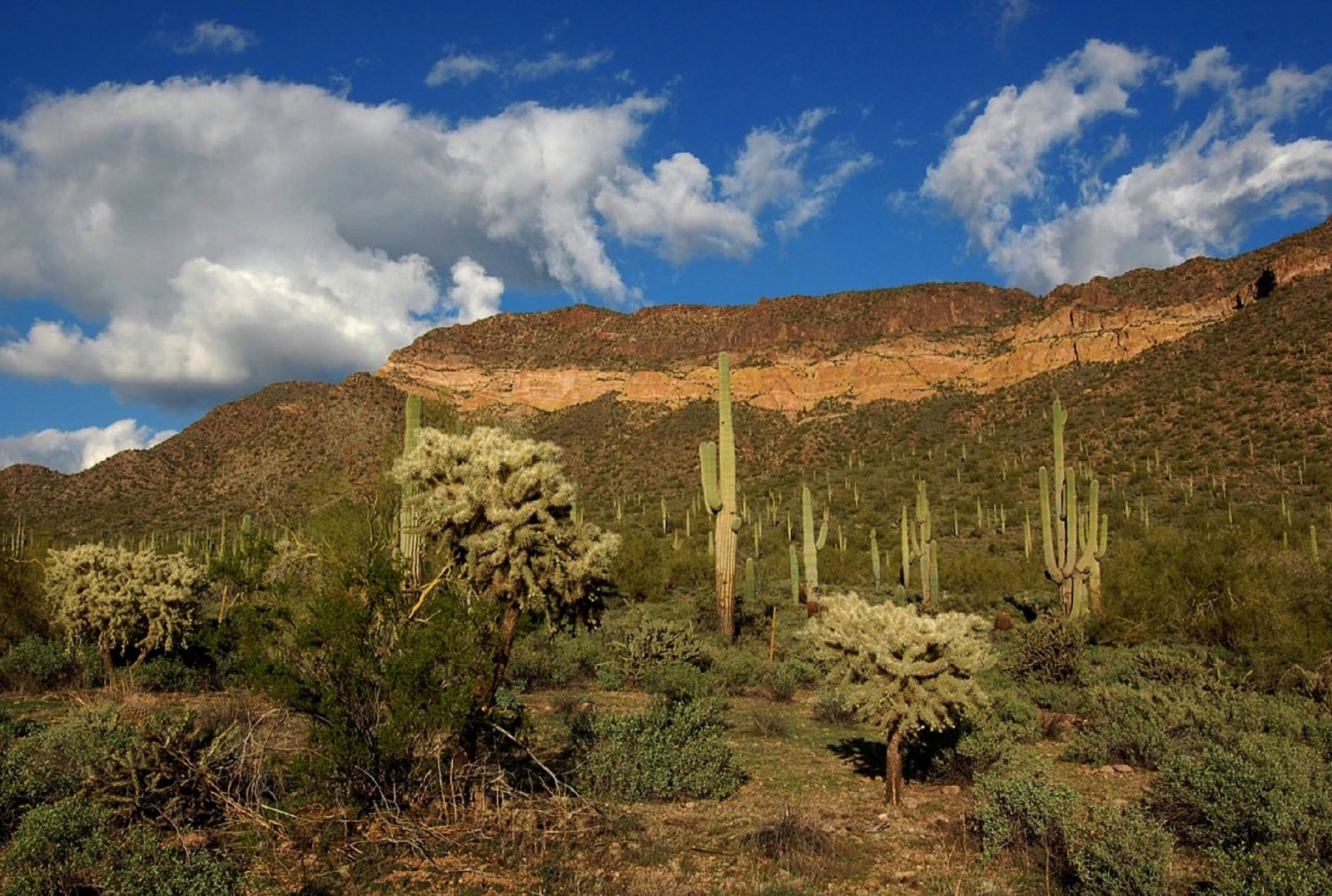 Usery Pass Mountain, Sonoran Desert. Photo by Midnight Believer via Flickr CC