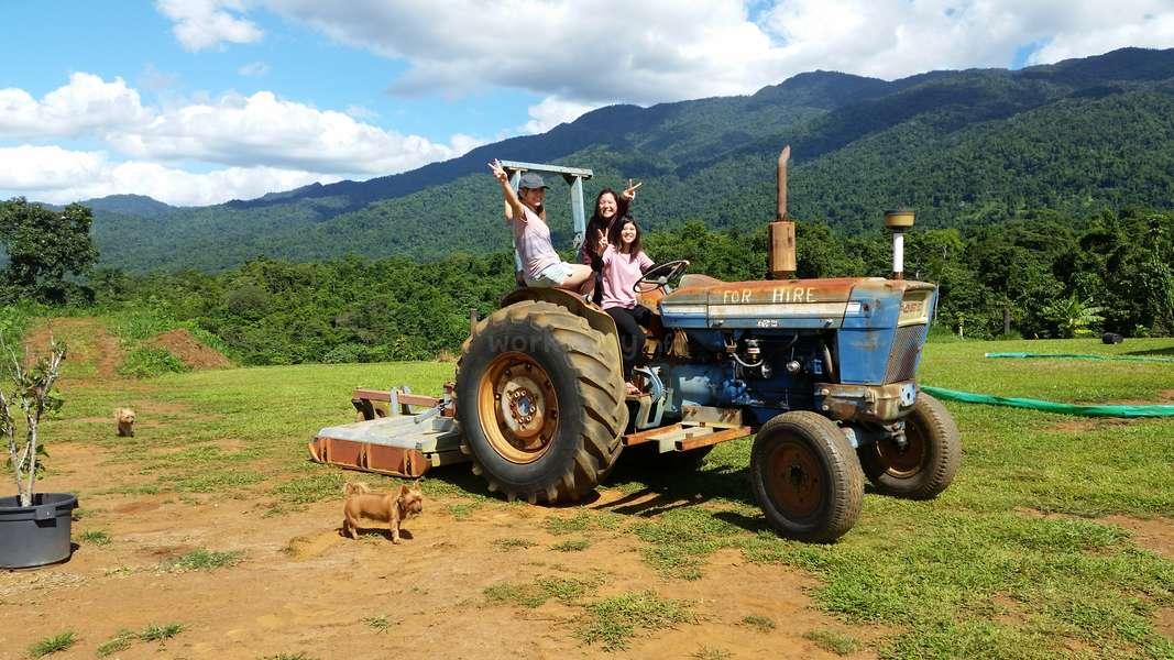 Workaway: Working on the farm