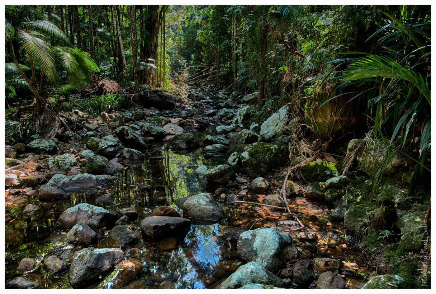 Things to do in Byron Bay: Repentance Creek Nightcap National Park