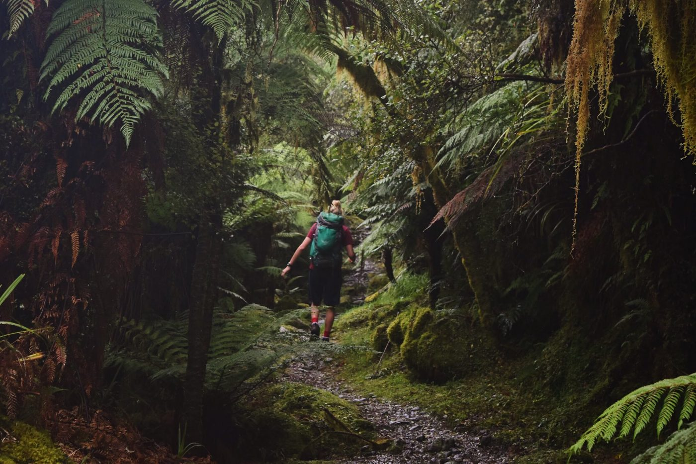 New Zealand South Island Hikes