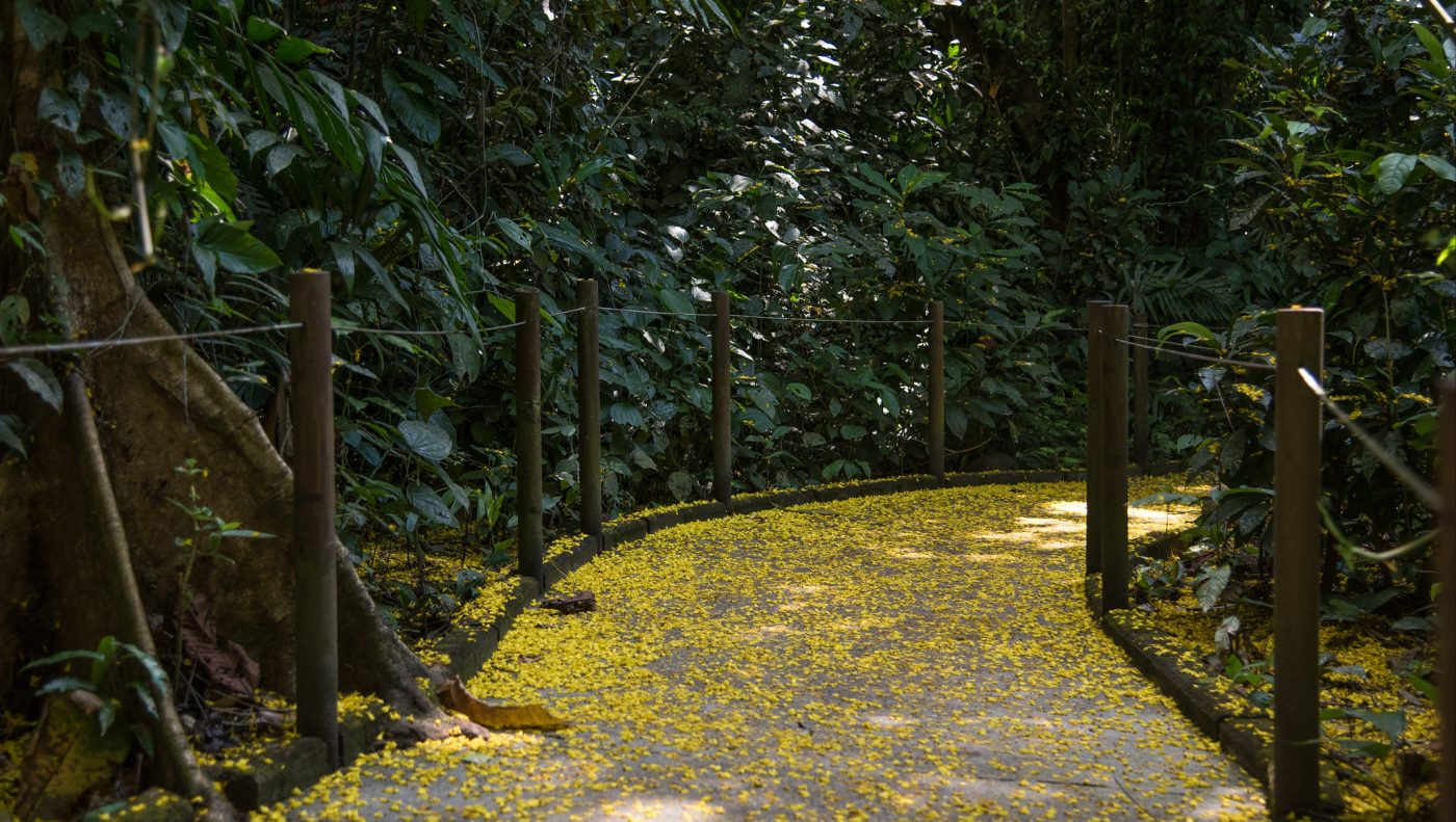 The Complete Guide to Costa Rica National Parks - Carara