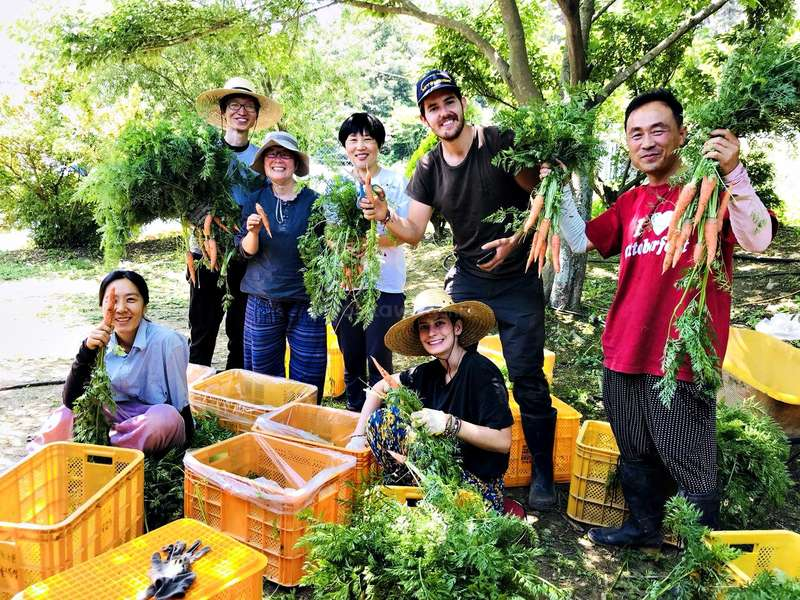 Workaway: Gardening with Volunteers