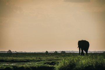 Guide to Visiting Chobe National Park in Botswana