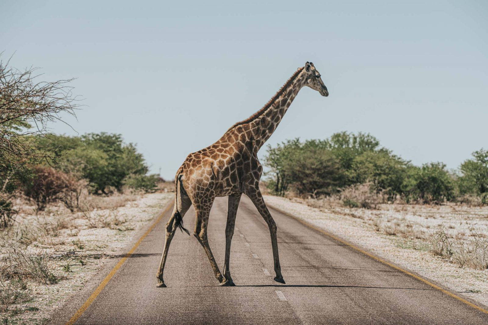 traveling to Namibia