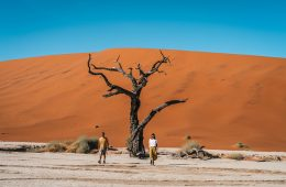 Deadvlei, Sossusvlei - the most iconic destination in Namibia