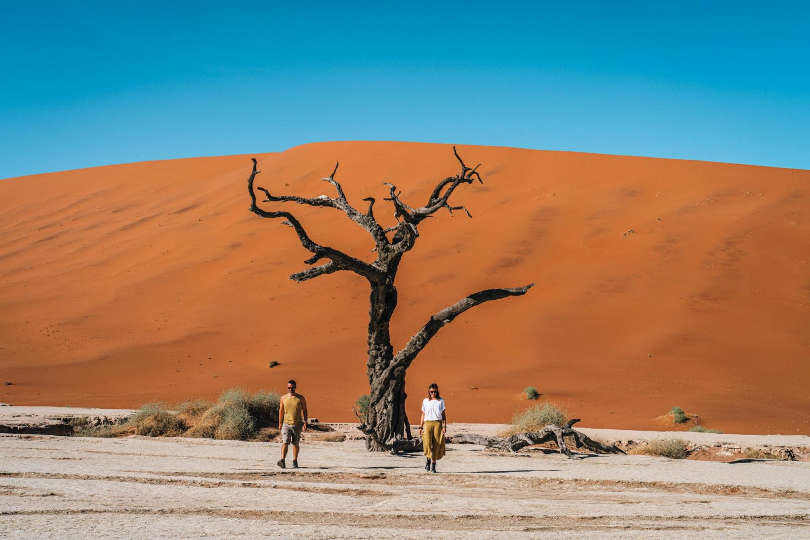 Deadvlei, Sossusvlei - the most iconic destination in Namibia, traveling to Namibia