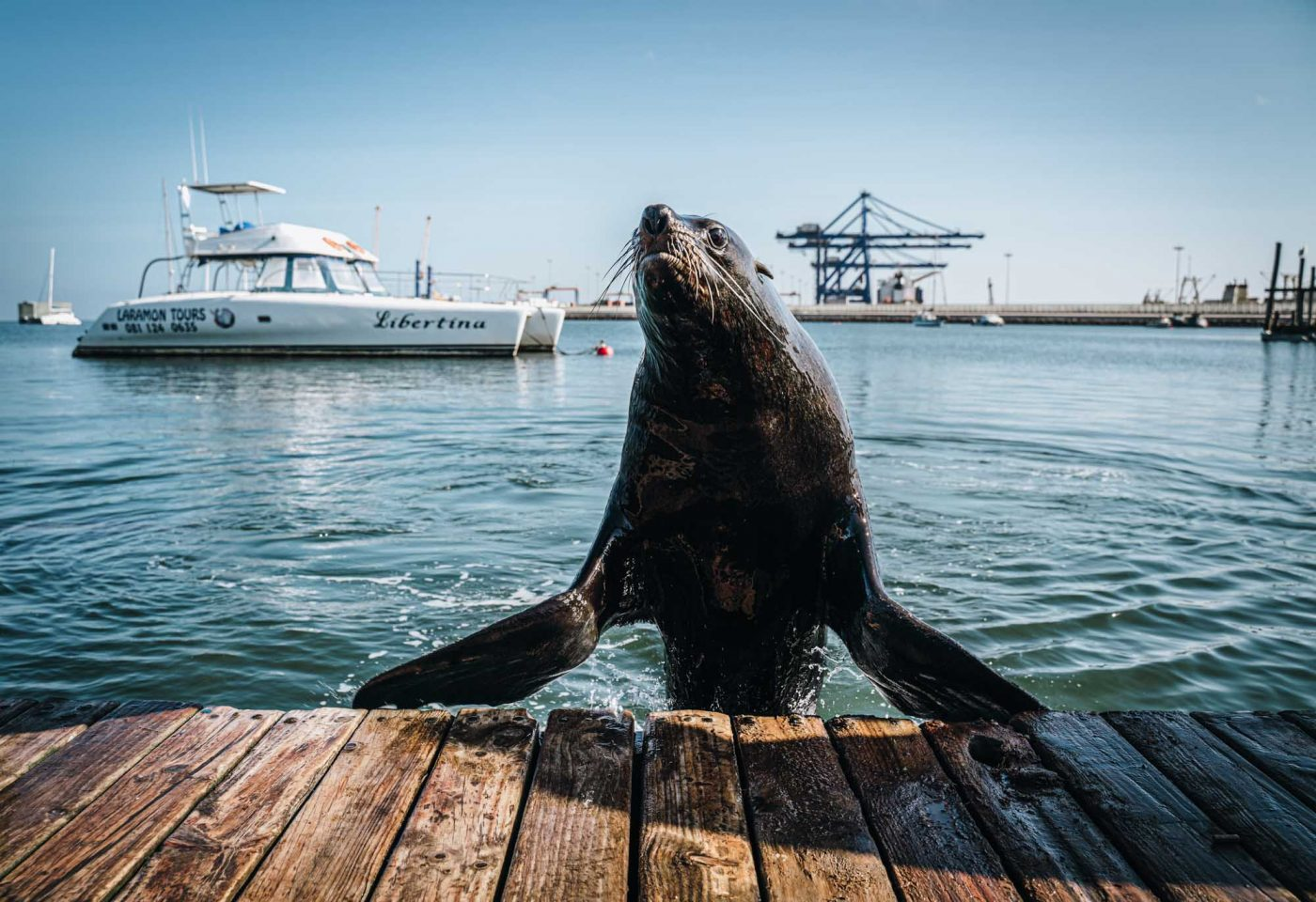 Making friends with a seal in Walvis Bay outside of Swakopmund