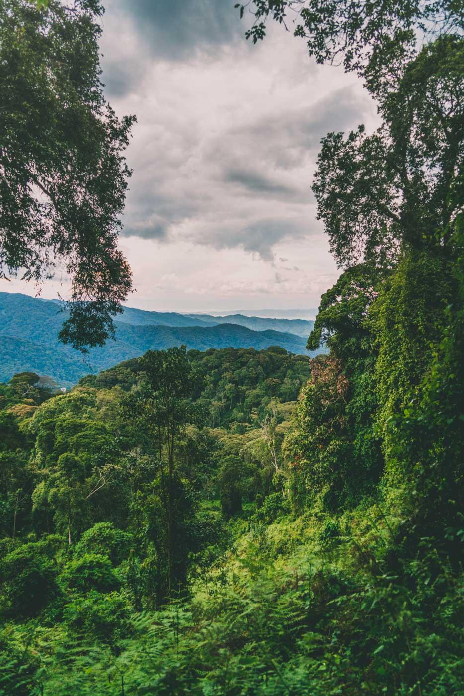 rwanda gorilla safaris trail