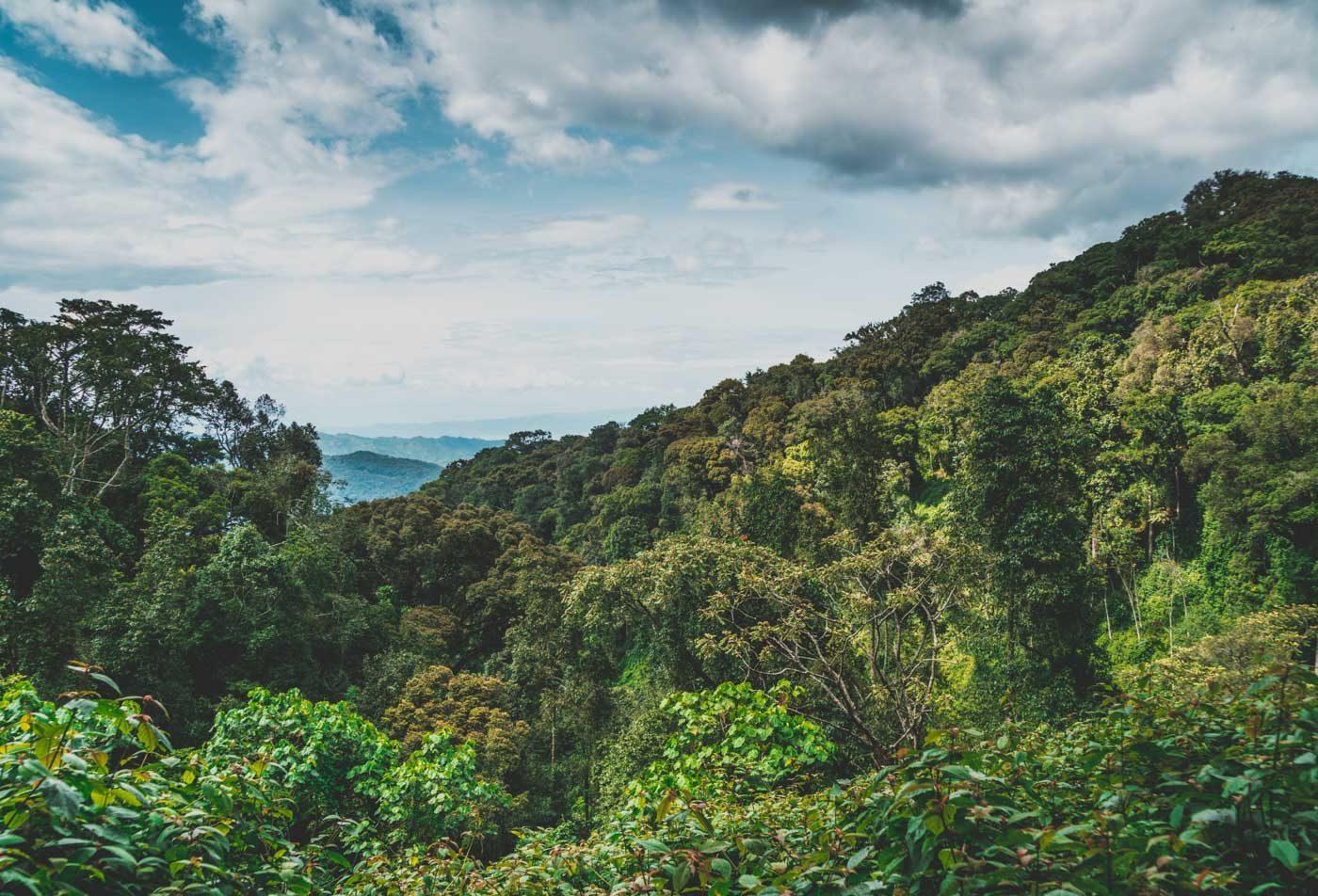 gorilla trekking rwanda scenery