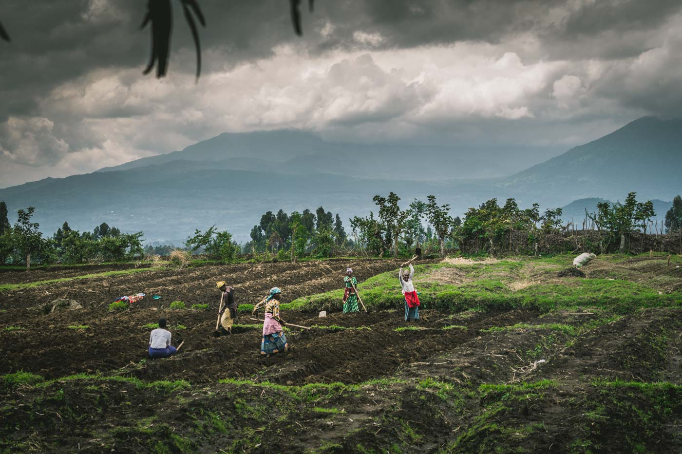 Traveling to Rwanda: Locals working on the fields just outside of Volcanoes National Park