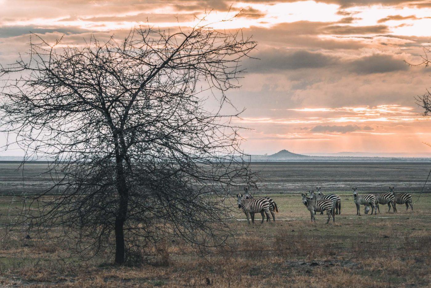 Sunrise on Lake Manyara with andBeyond
