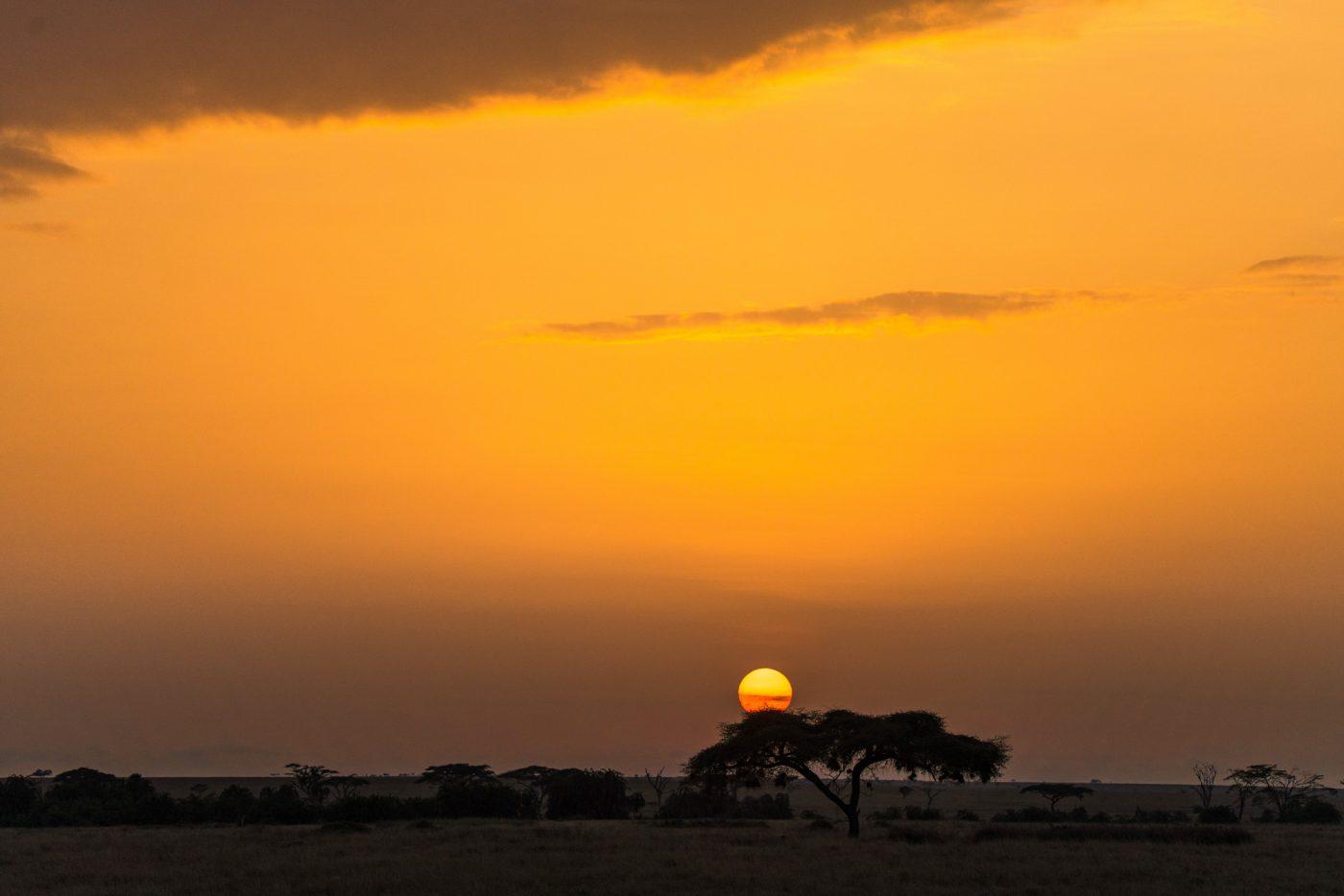 Serengeti sunset on safari