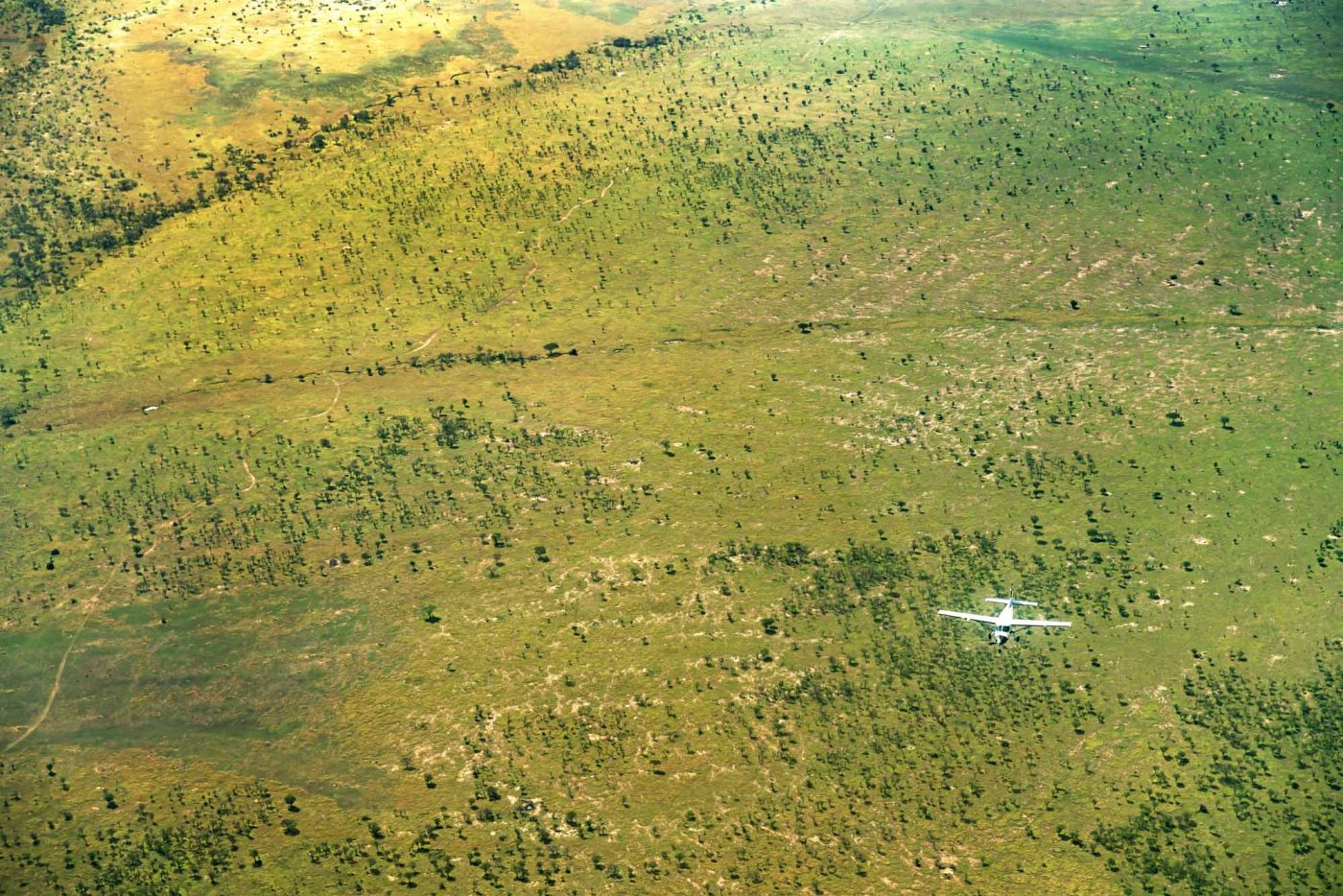 Serengeti Safari, Western Corridor