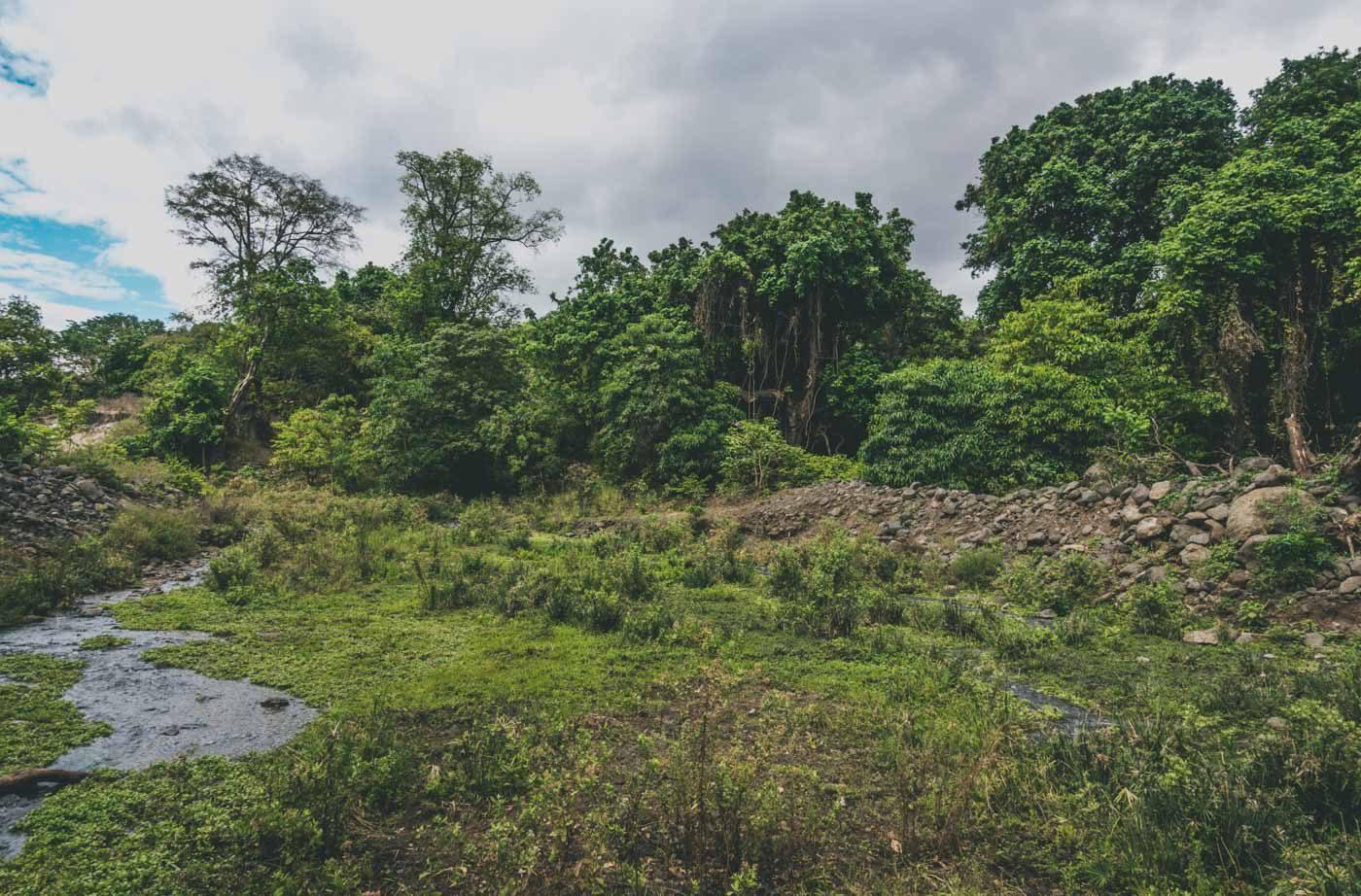 Serengeti wet season