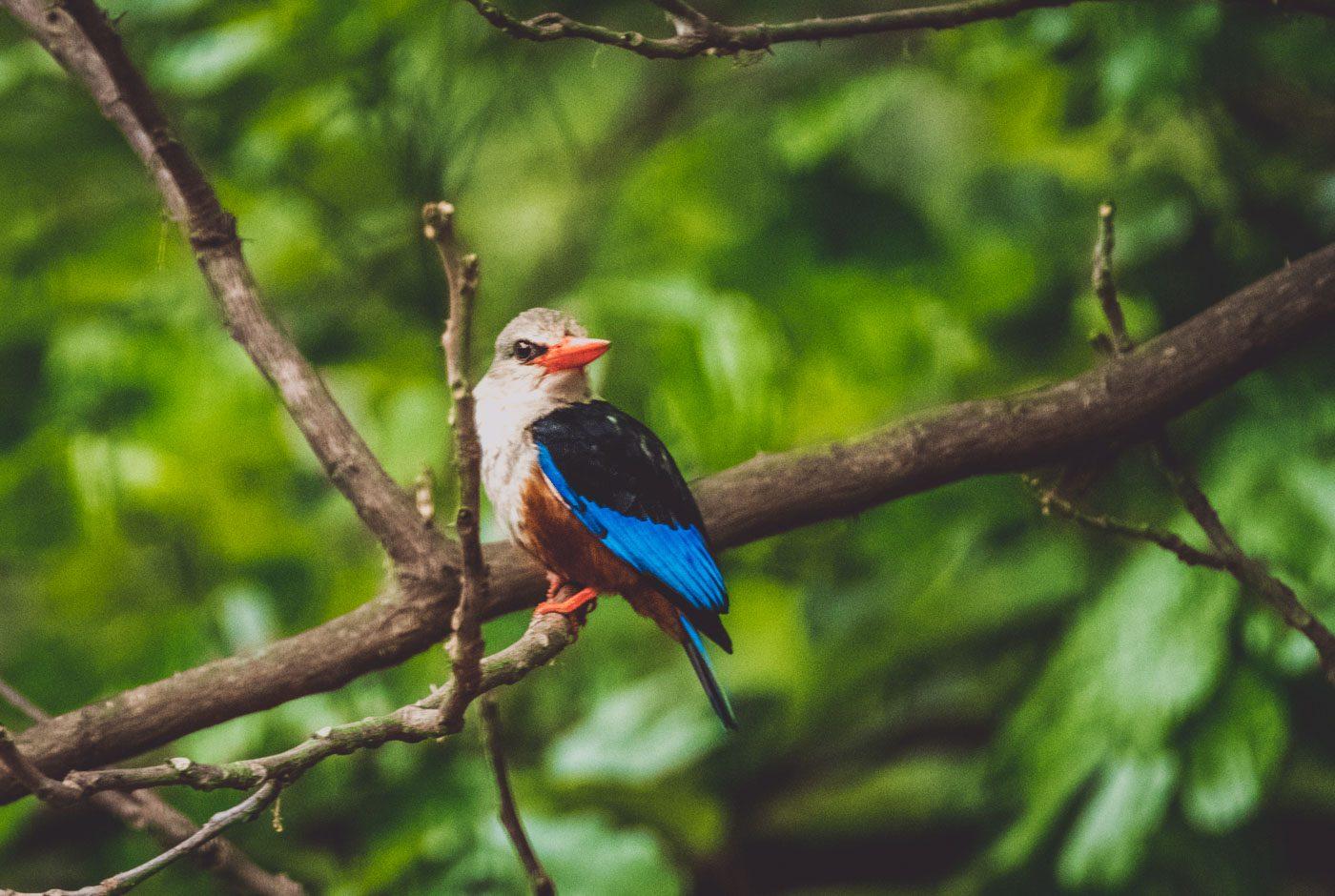 Serengeti Safari birds