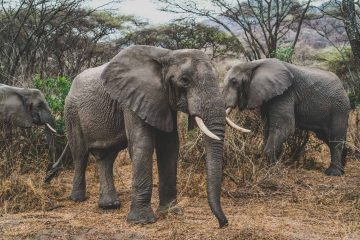 Ethical Wildlife Experiences to Have on Your Next Vacation