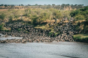 Responsible Guide to Africa's Great Wildebeest Migration in the Serengeti