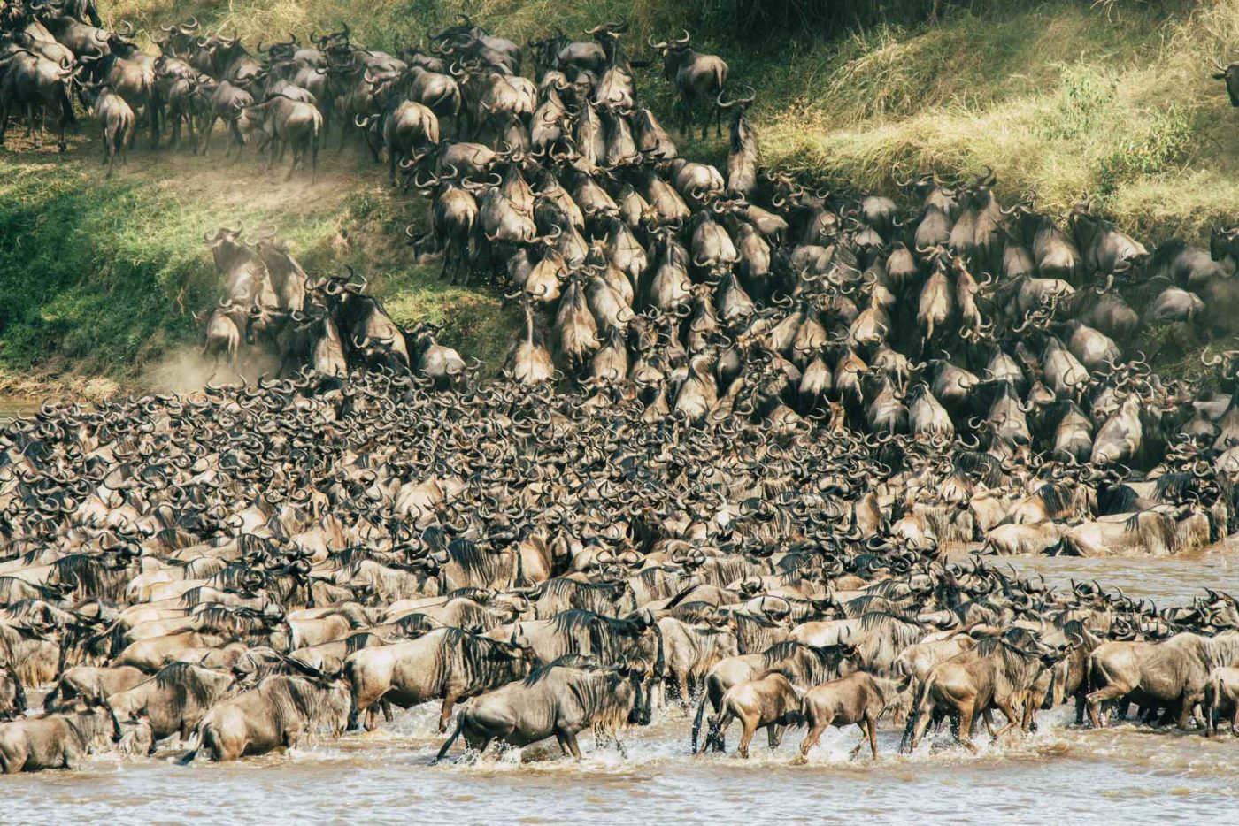 Wildebeest migration in the Serengeti, best place for safari in africa