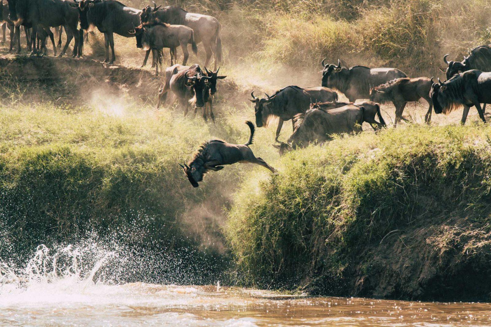 Wildebeest migration in the Serengeti