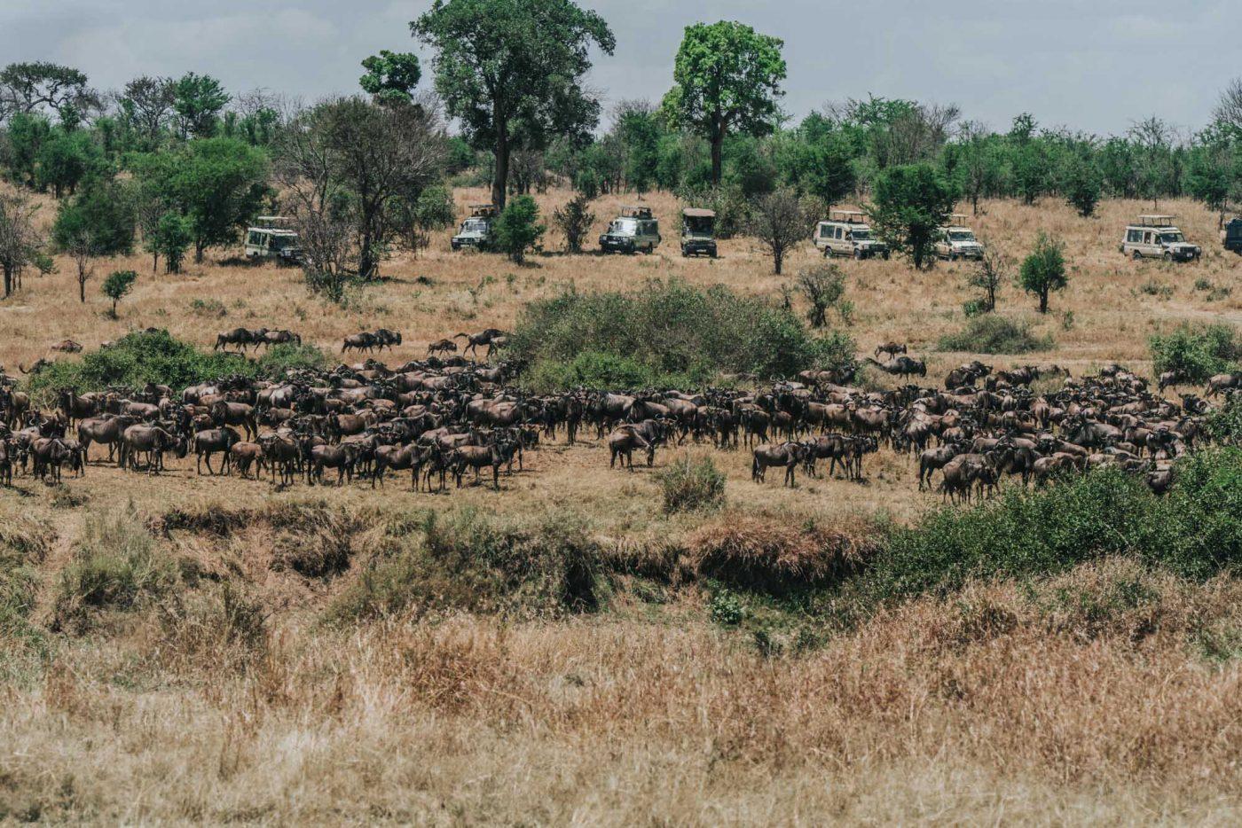 Serengeti Safari, wildebeest migration