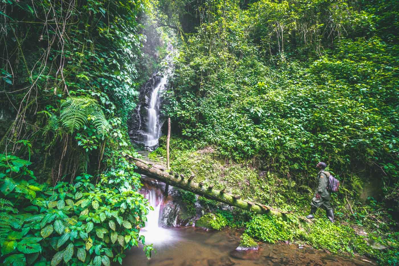 Waterfall at the Bwindi Nationa Park in Western Uganda