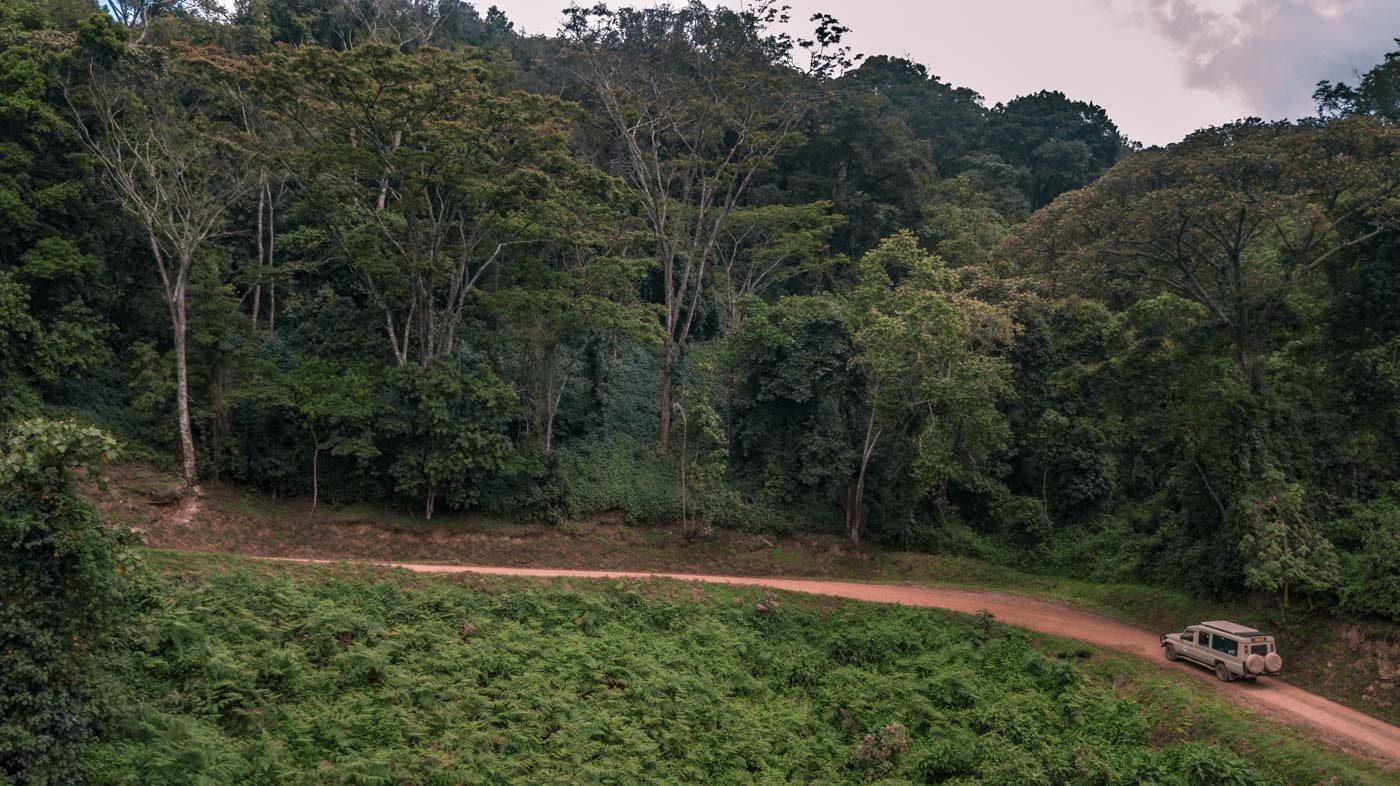 Mountain gorilla tracking Bwindi National Park