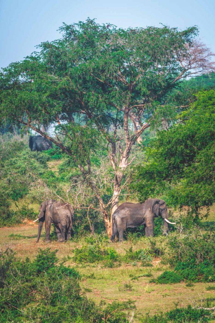 Ultimate Uganda Safari and Other Things to Do in Uganda