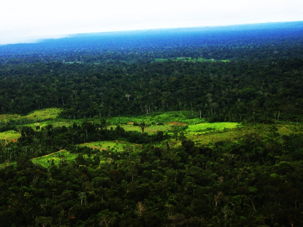 Amazonia National Park, Brazil
