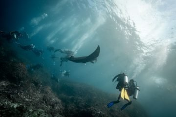7 Best Dive Spots to Scuba Dive in Indonesia