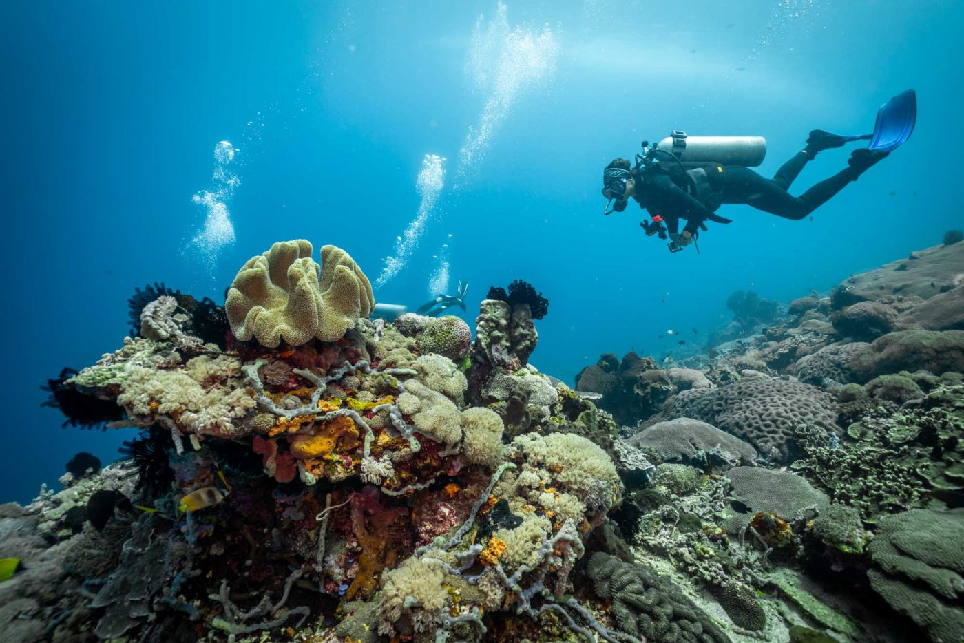 Guide to Diving in Bali, dive in indonesia