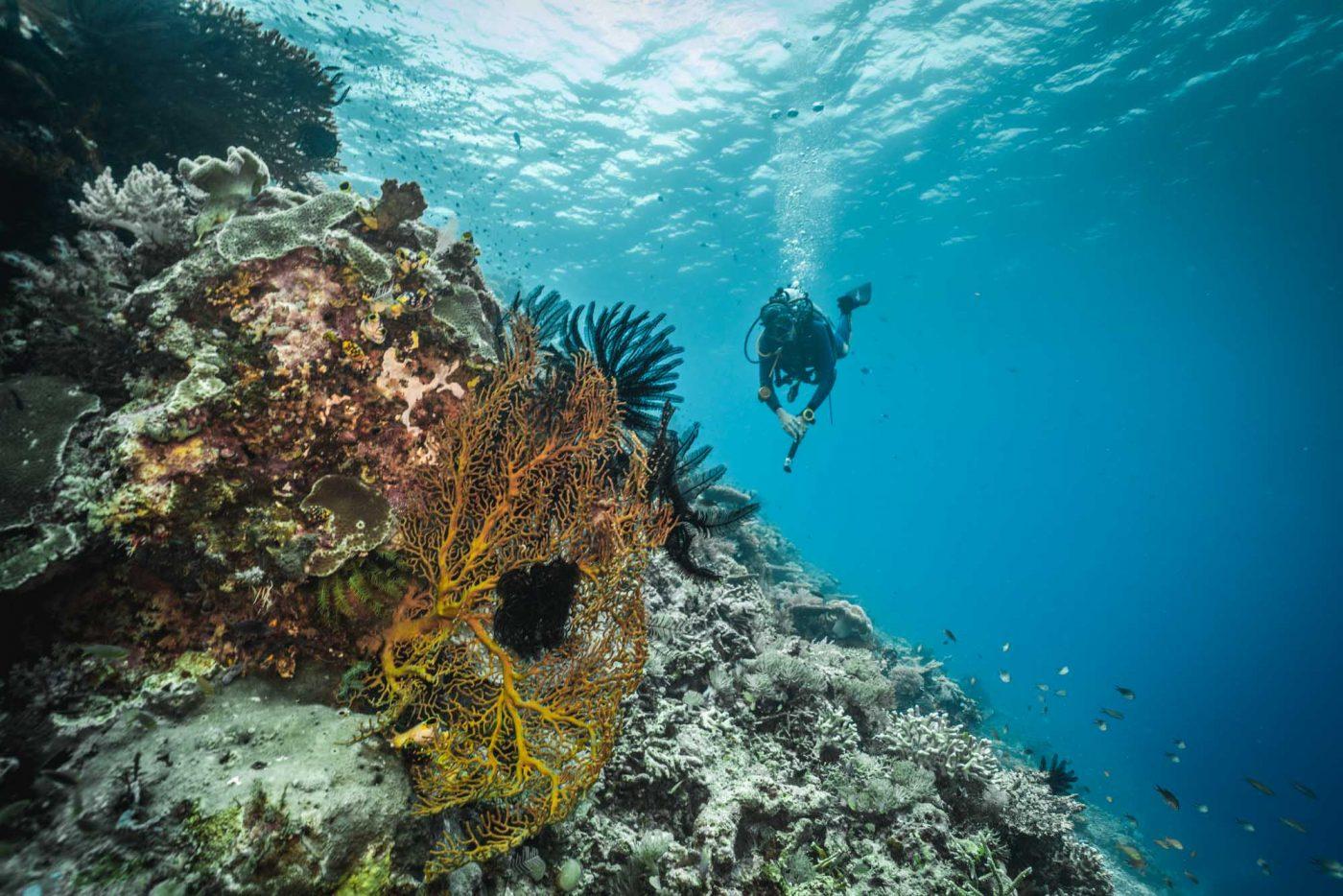 Diving at Papua Paradise Eco Resort, Raja Ampat