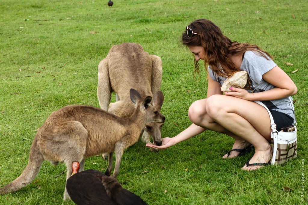 Lone Pine Sanctuary which is one of the best day trips from Brisbane Queensland Australia