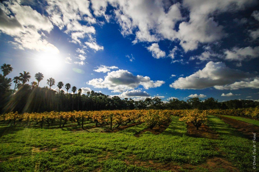 Barossa Valley, South Australia, wine regions in Australia