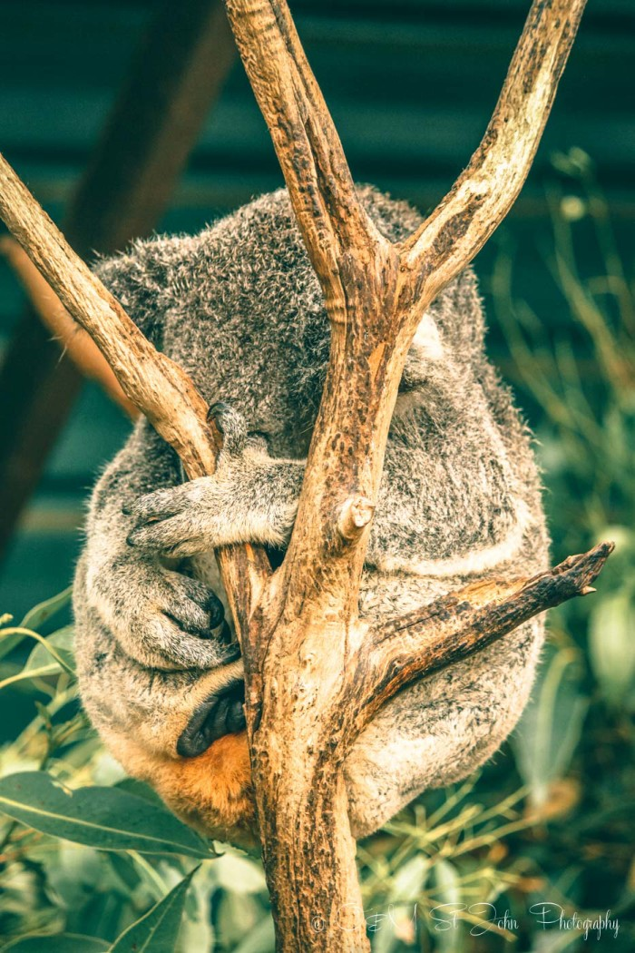 What to do in Brisbane: Koloa