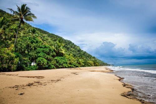 Guide to Visiting Daintree National Park, Where the Rainforest Meets the Reef