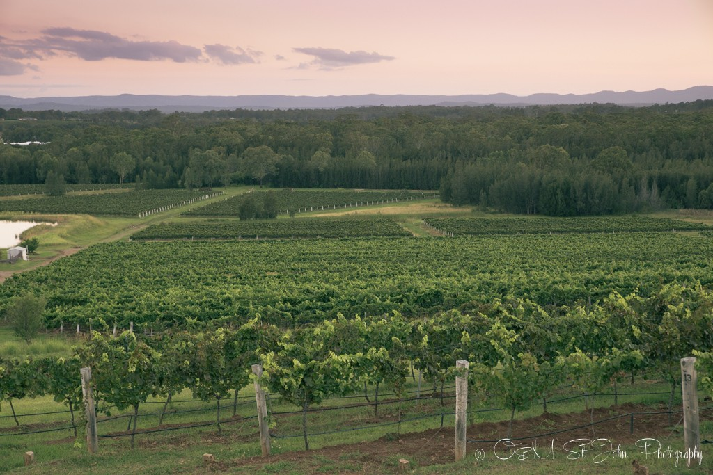 Rolling vineyards in Hunter Valley, NSW, wine regions in Australia