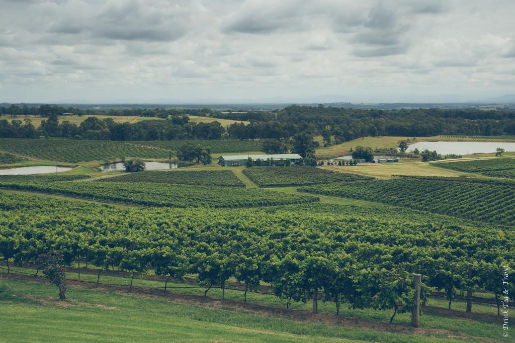 Rolling vineyards in Hunter Valley