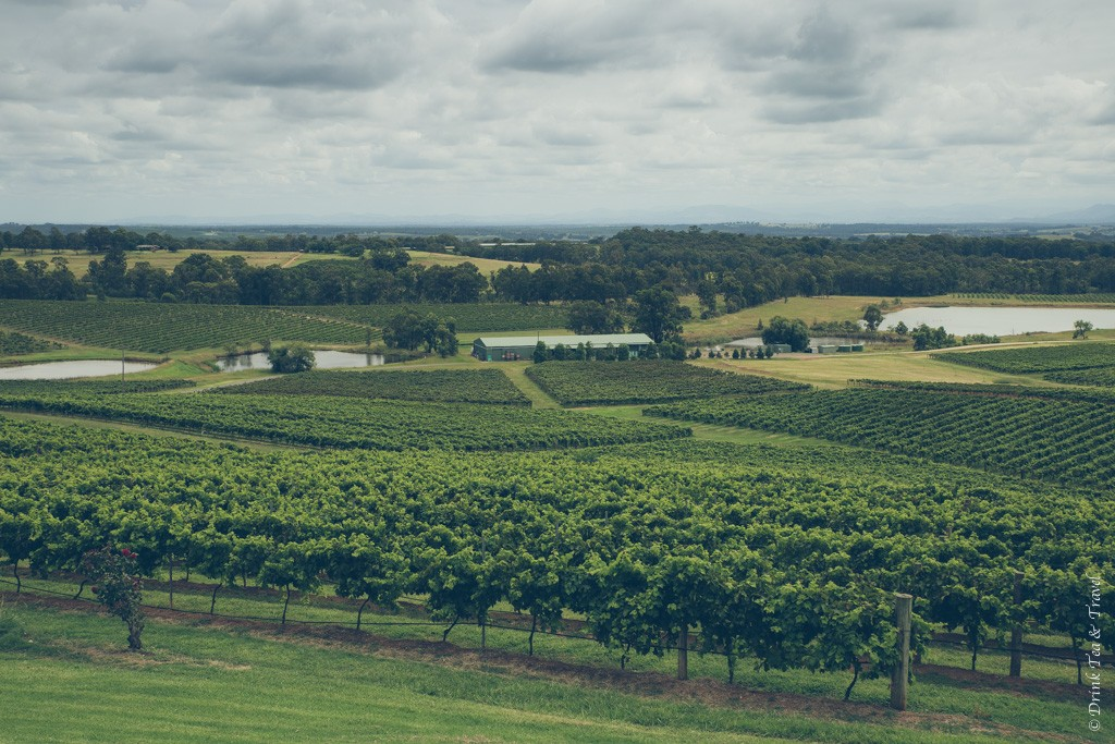 Things to do in Newcastle NSW: Rolling vineyards in Hunter Valley