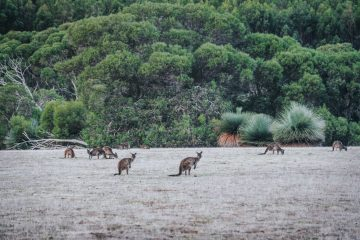 Things To Do In Kangaroo Island, the Best Wildlife Destination in Australia