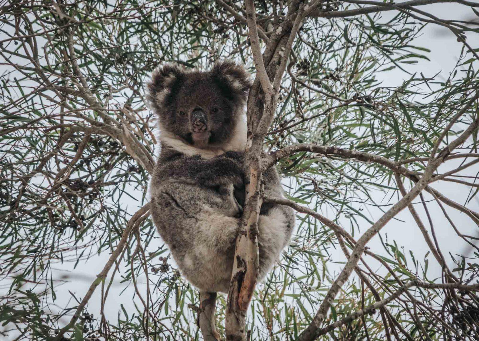 romantic getaways Australia that you should experience