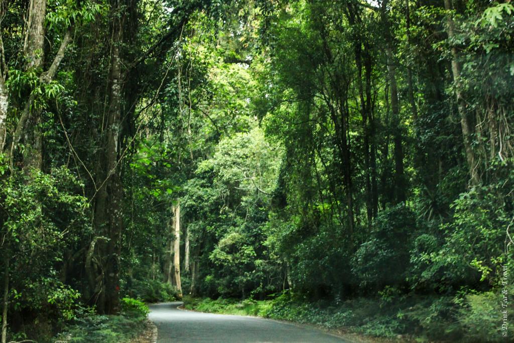 Trip to Australia cost: Lamington National Park, Queensland, Australia