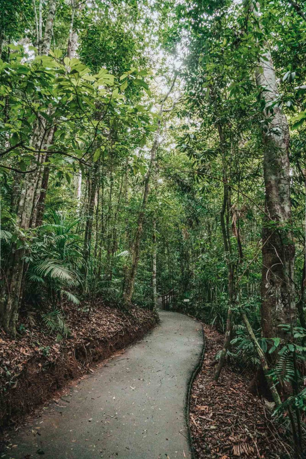 Visit Atherton Tablelands Near Cairns, Australia