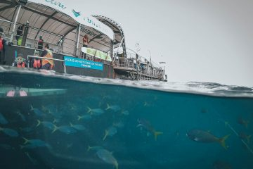 Reefsleep - The Best Great Barrier Reef Tour from Airlie Beach, Australia
