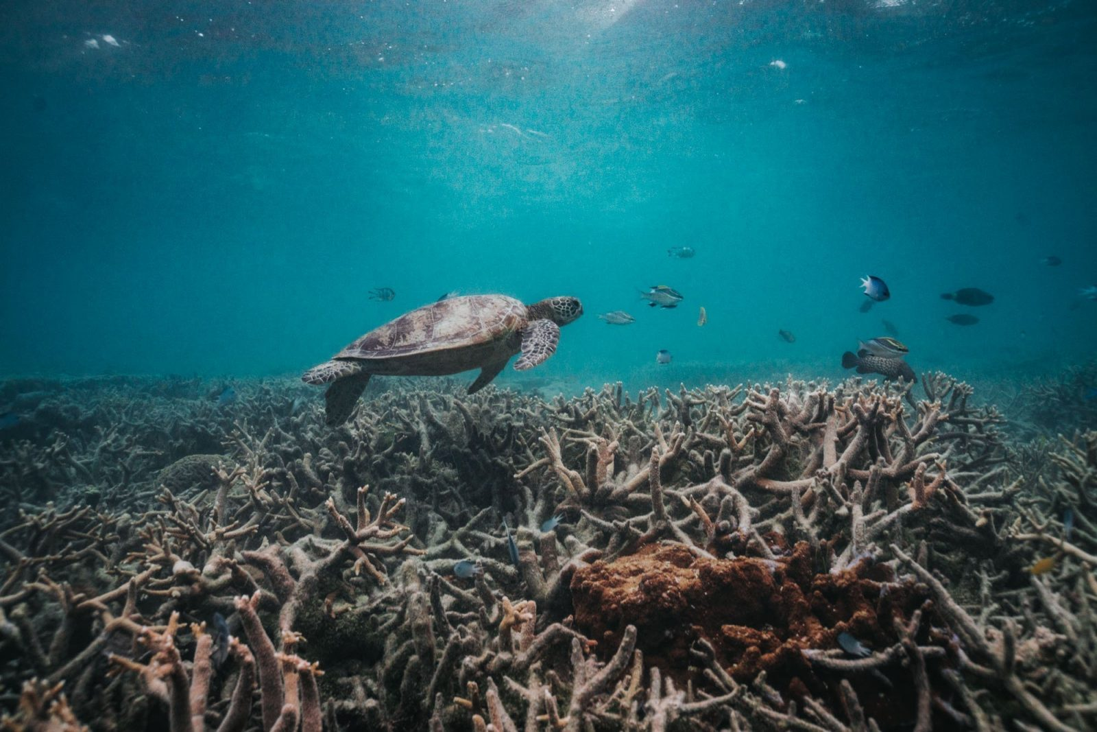 Things to do in Port Douglas: Great Barrier Reef