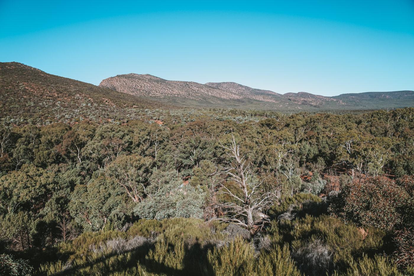 Wangara Lookout, Flinders Range National Park