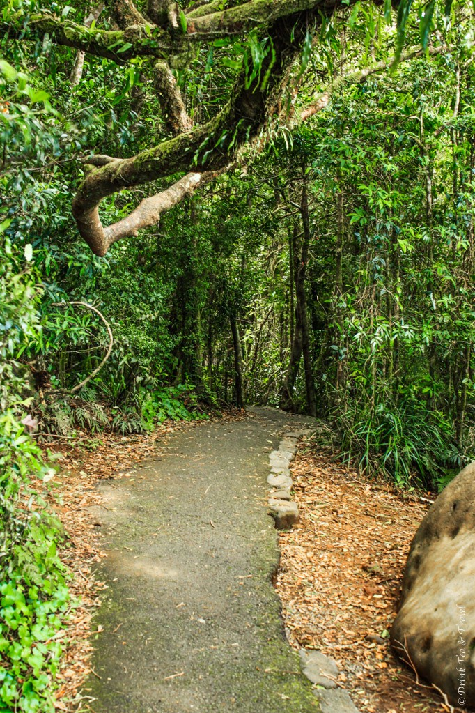 Following the Twin Falls Track in Springbrook National Park