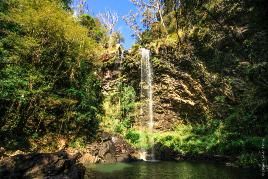 The Ultimate Guide to Visiting Springbrook National Park in Queensland, Australia