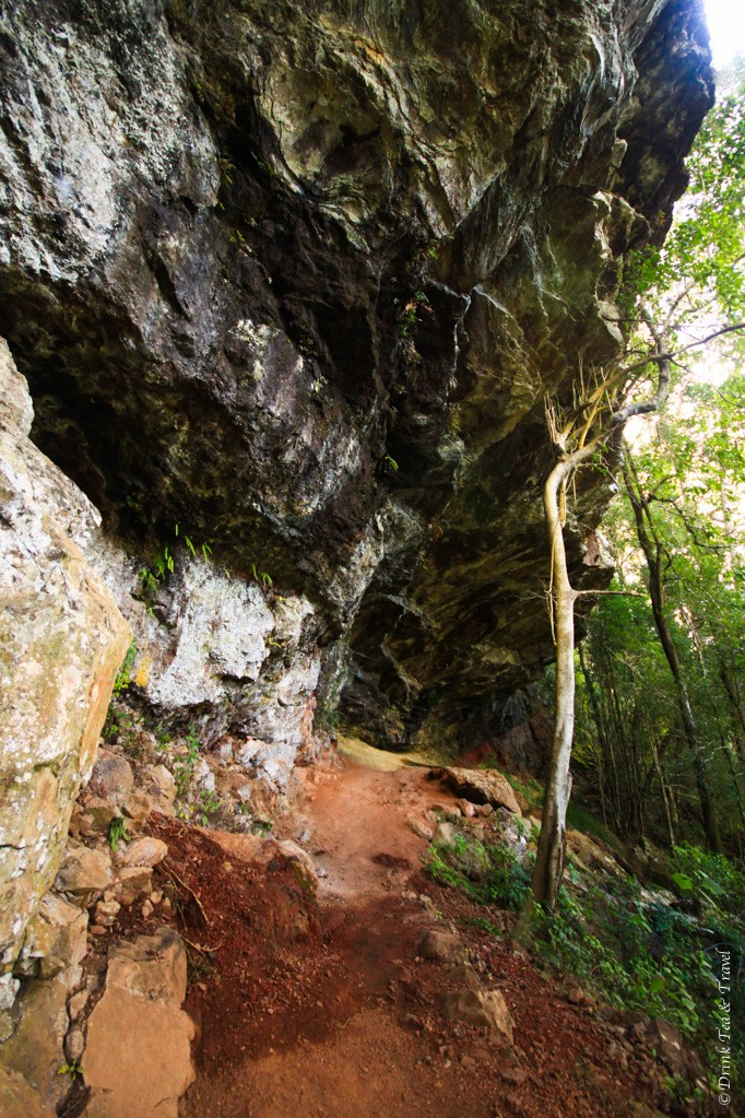Rocky underpath along Twin Falls Circuit track, Springbrook National Park